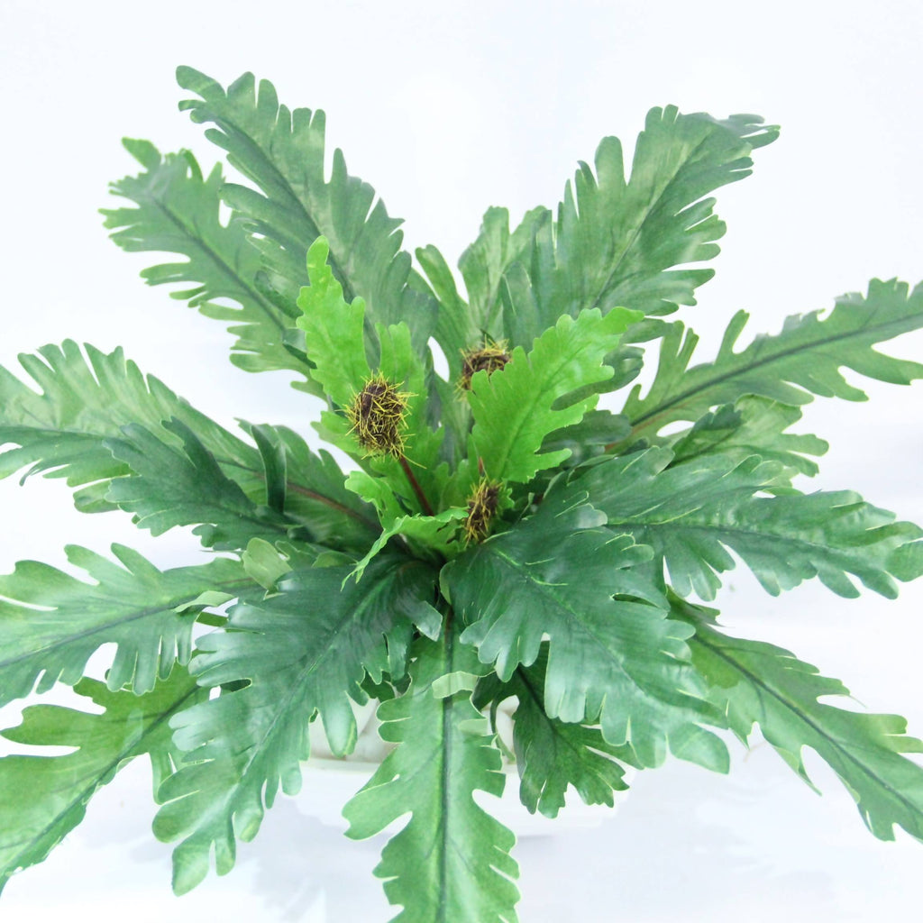 Artificial Potted Bird's Nest Fern Bush with White Pot (0.3m)