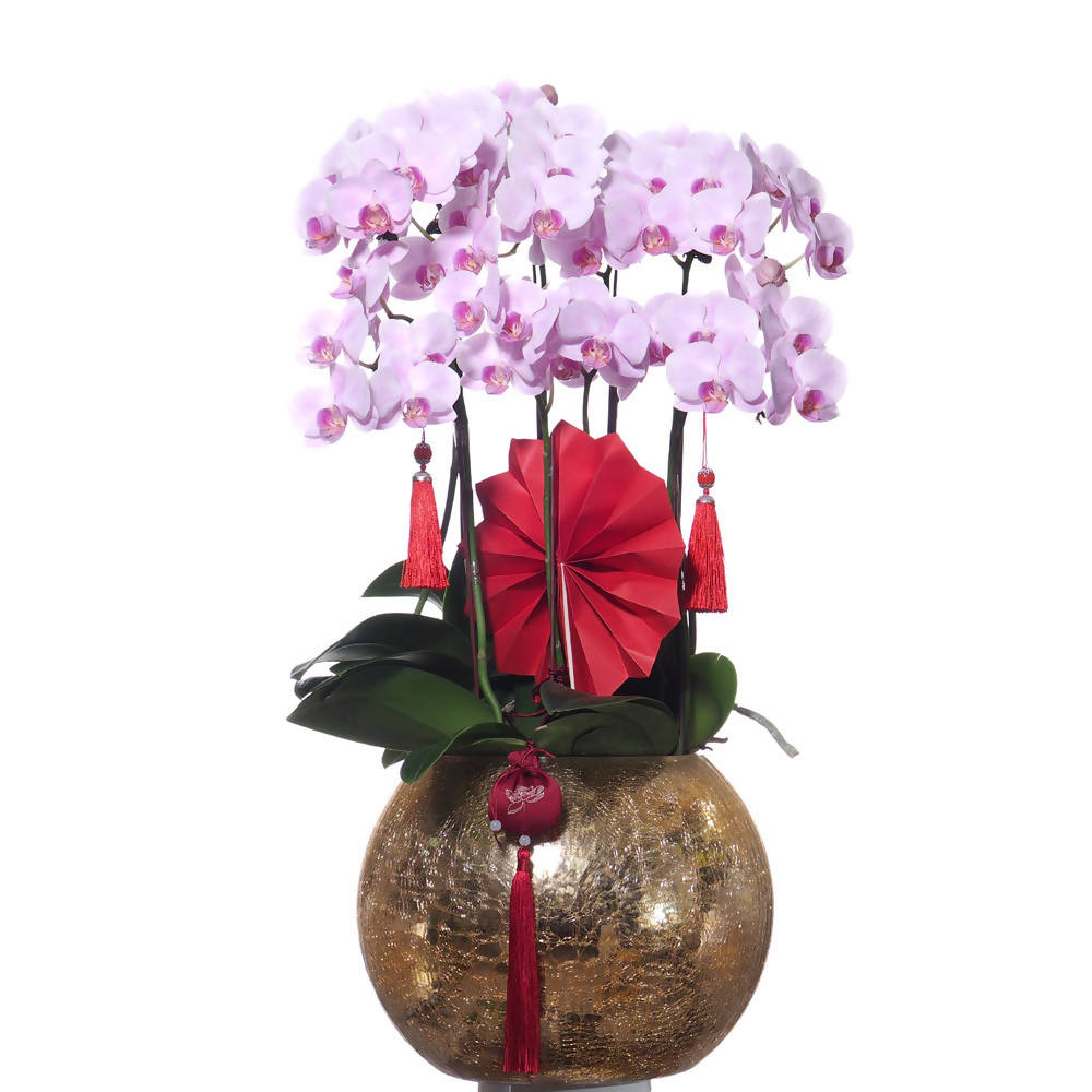 5 in 1 Phalaenopsis (岁岁平安) with CNY deco in golden glass bowl