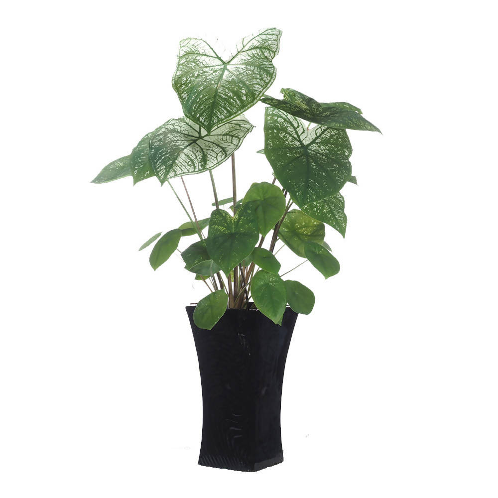 Caladium White Swan in Ceramic Pot