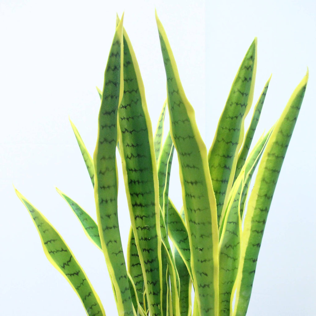 Artificial Snake Grass with White Pot (1.3m)