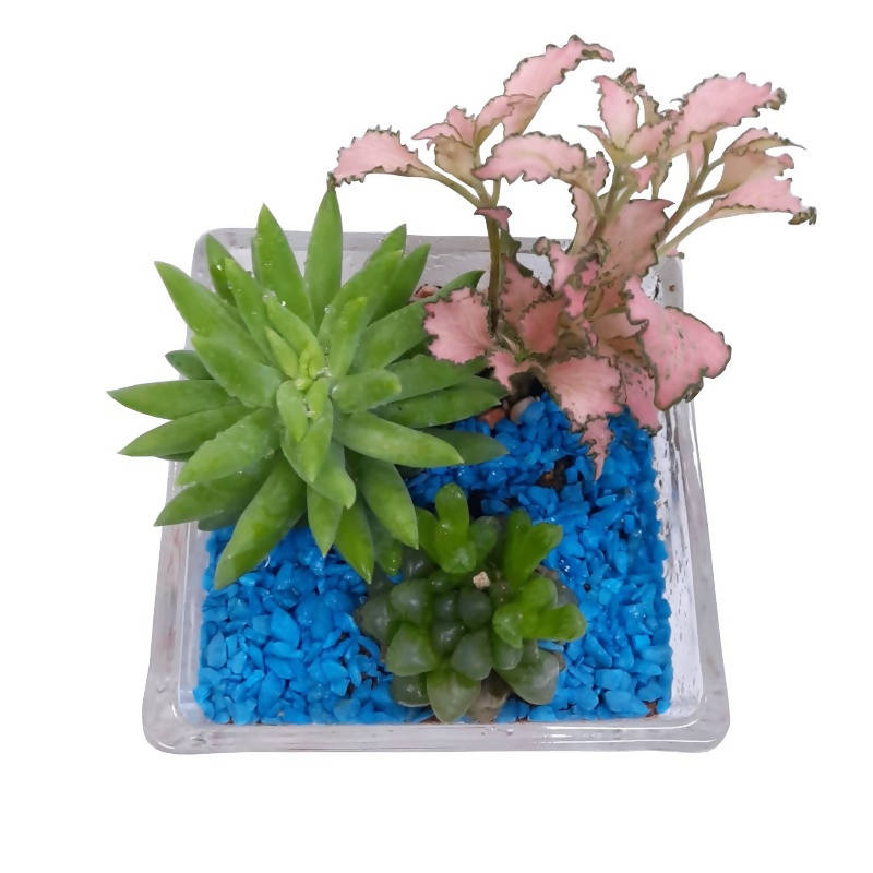 Assorted Succulent Arrangement in Rectangular Glass Pot