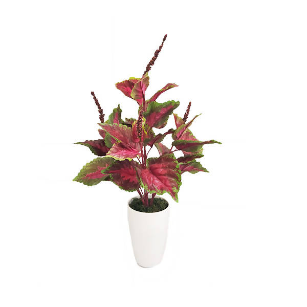 Artificial Pink Coleus Bush with White Pot (0.70m)