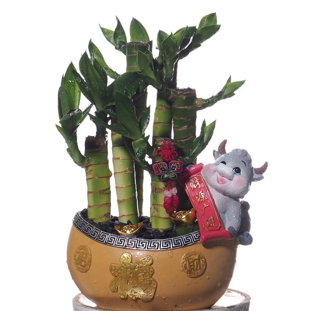 Chinese New Year Tabletop Lucky Bamboo with Zodiac Ox
