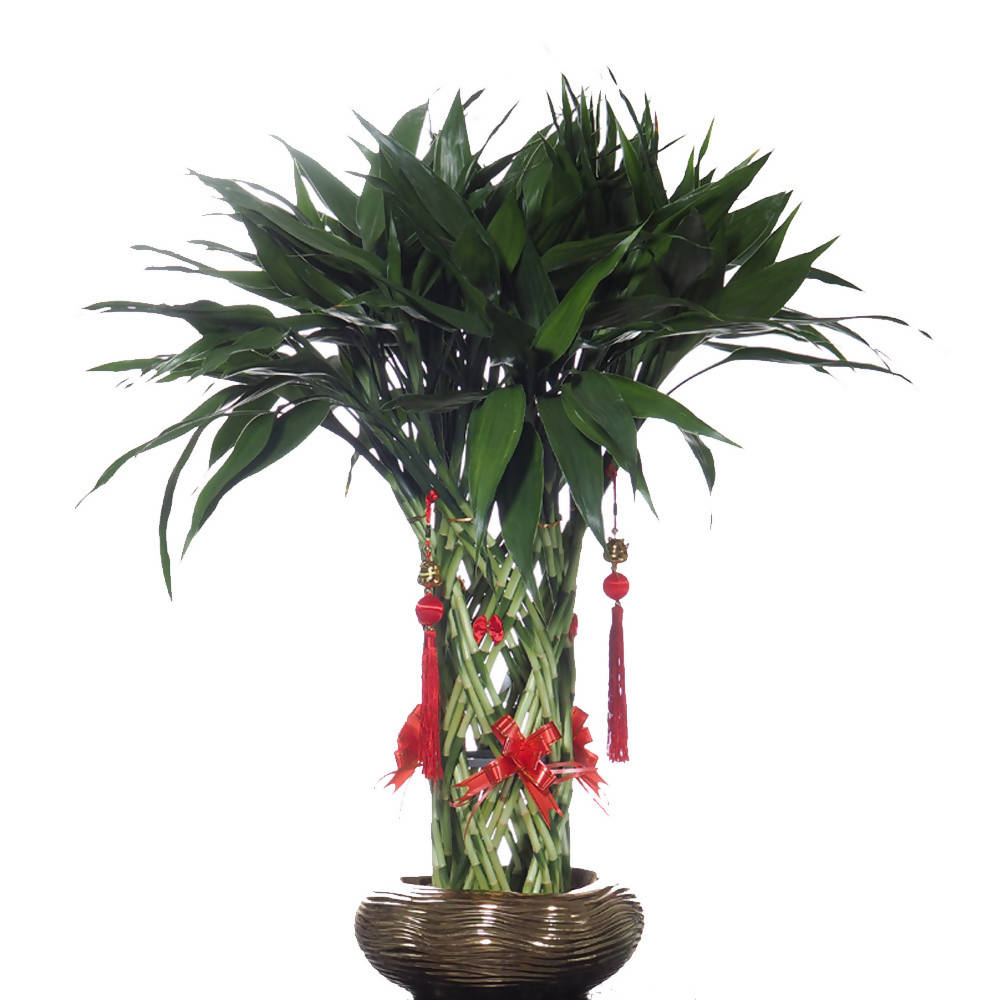 Chinese New Year Lucky Bamboo Basket in Gold Pot