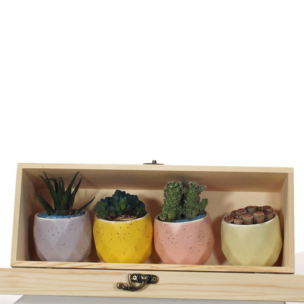 Succulents Gift Set (4pcs/Set)