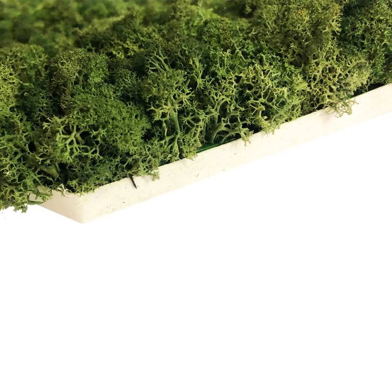 Reindeer Moss (Customize with installation)