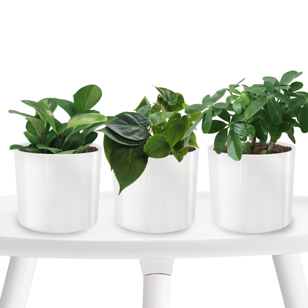 3 in 1 Air-Purifying Plants in white