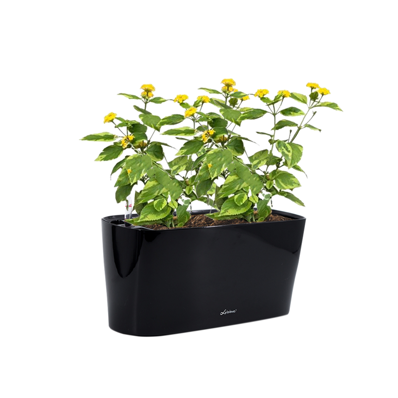Mini Windowsill 40cm in Black with Lantana camara