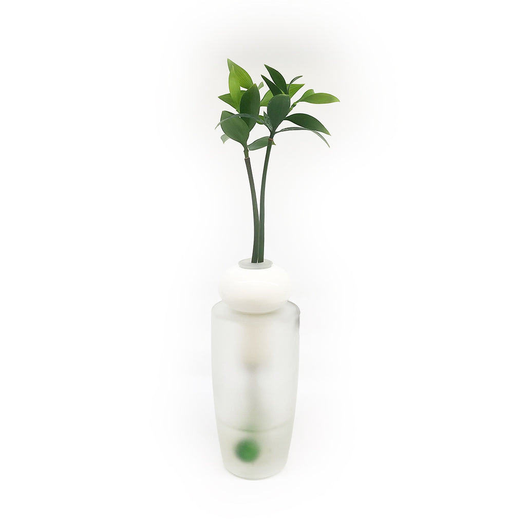 Hydroponic Bonsai in Elegant Vase