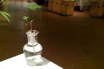 Hydroponic Bonsai in Bottleneck Vase