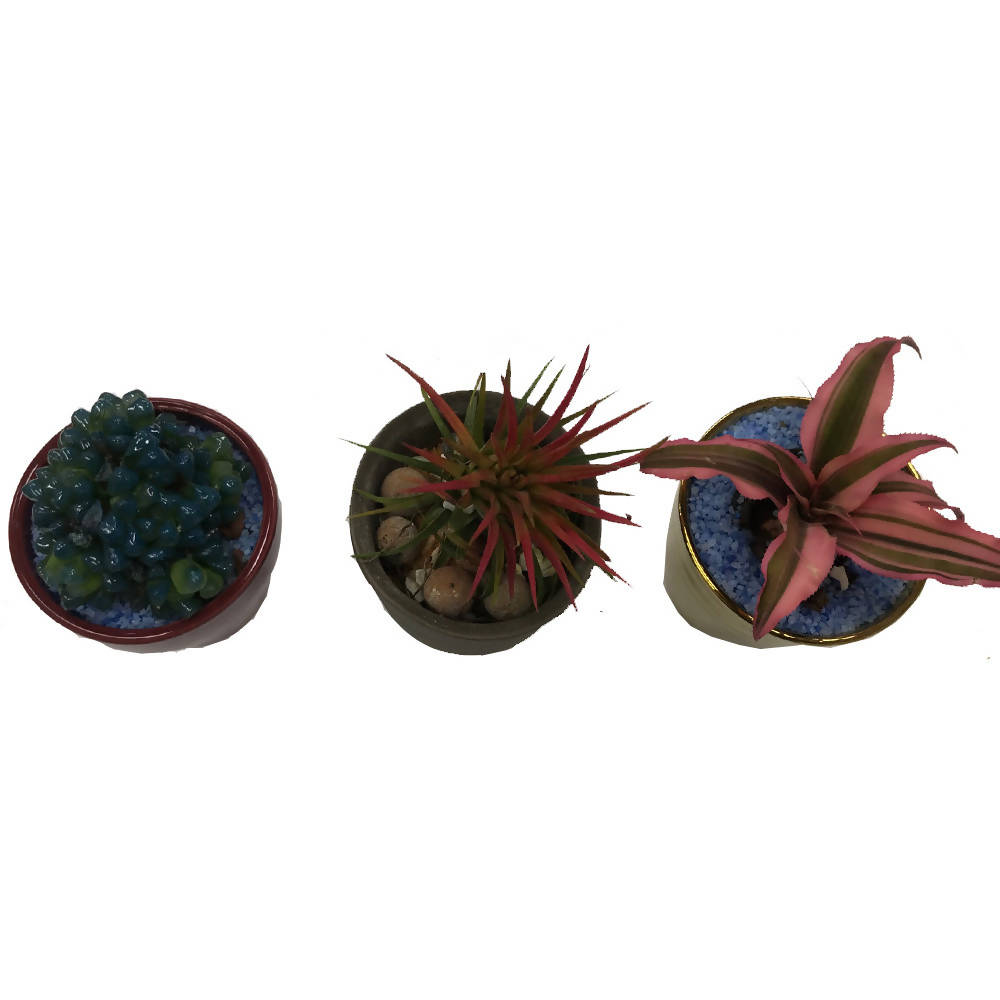 Succulents Package in Maroon/Gold/Clay Pot