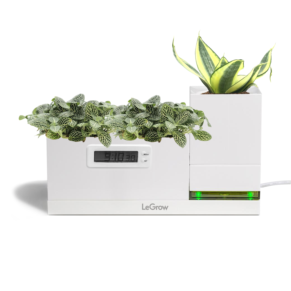LeGrow Power Pot and LeGrow Clock with Fittonia, Sansevieria