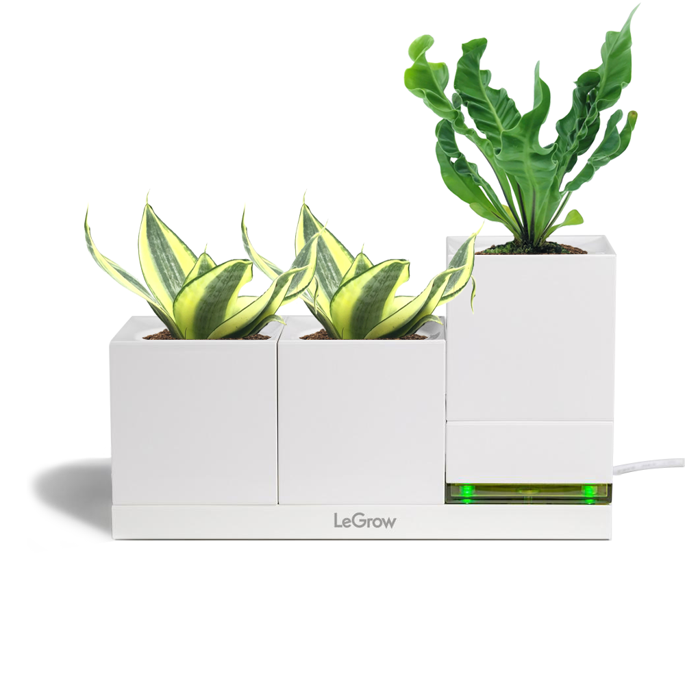 LeGrow Power Pot and Standard LeGrow with Sansevieria, Bird Nest Fern