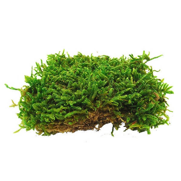 Flat Moss - Wall Panel (1m x 1m) Quick Installation