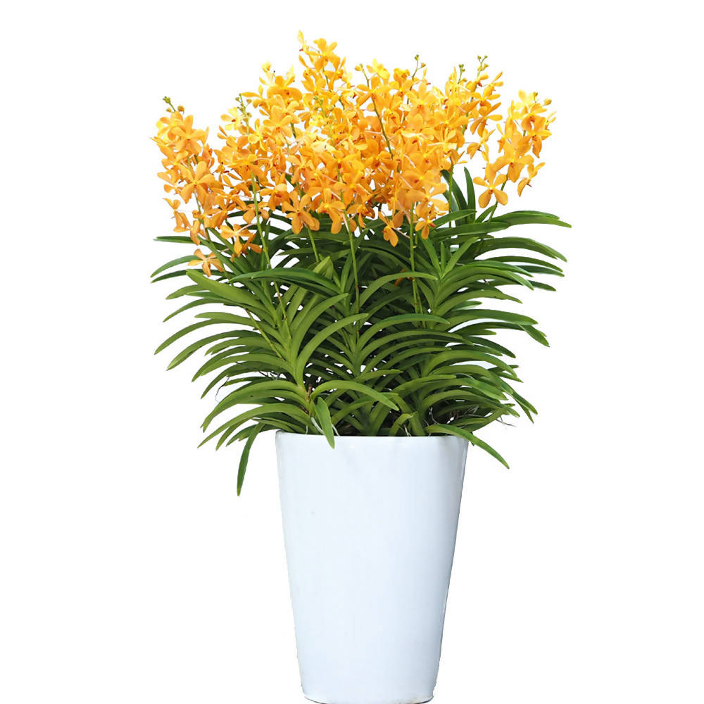 Aranda Orange Nugget 8in1 Arrangement in tall pot