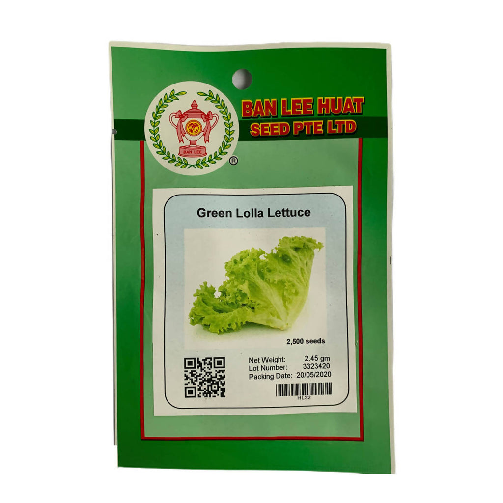 Green Lolla Lettuce