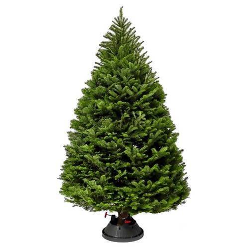 Noble Fir Christmas Tree (US Premium) w/ Tree Stand