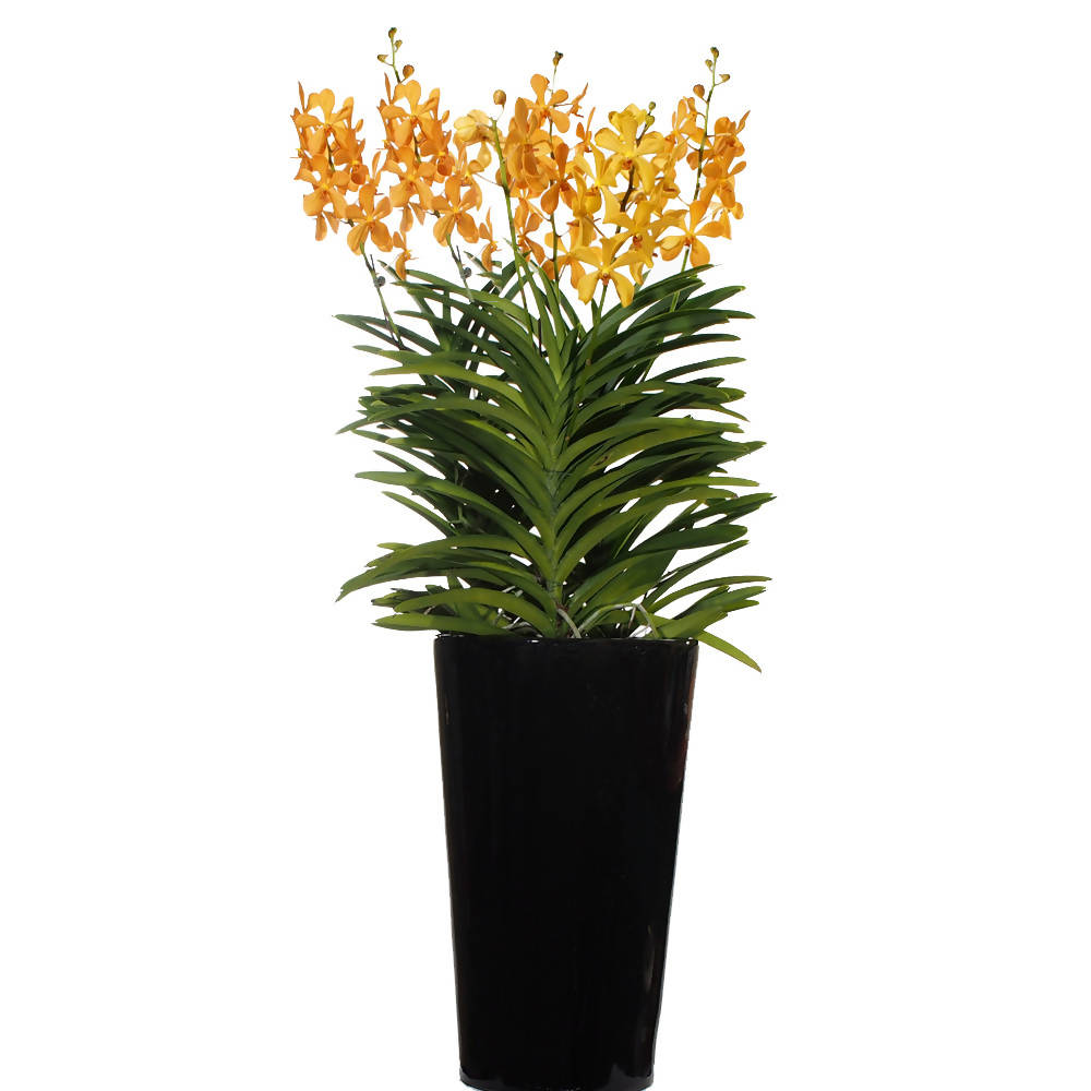 Aranda Orange Nugget 3in1 Arrangement in Tall Pot