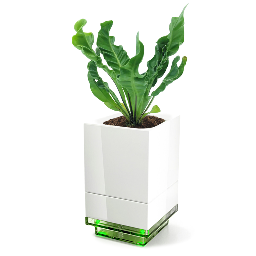 LeGrow Power Pot with Bird Nest Fern