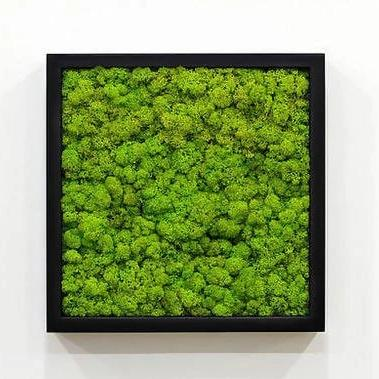 Reindeer Moss Assorted Colours - Black wooden frame 30cm x 30cm