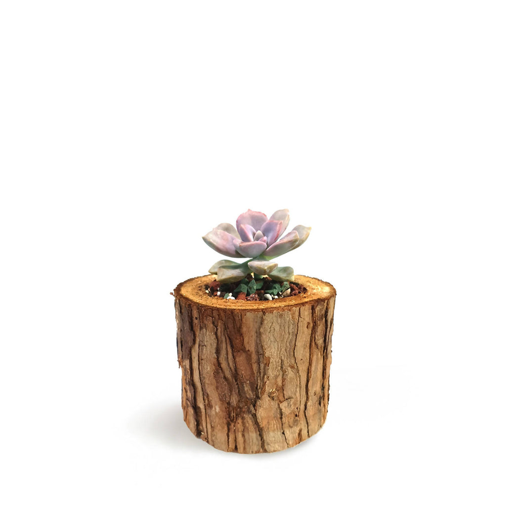 Assorted Succulent with Wooden Model (0.1m)