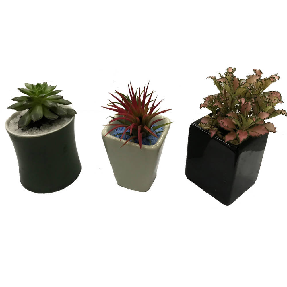Succulents Package Green White Black