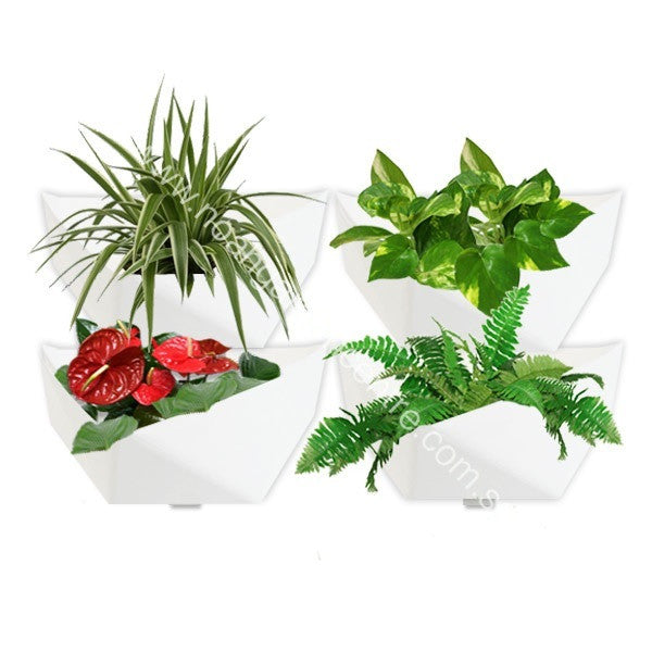 Prai Q in White with Assorted plants