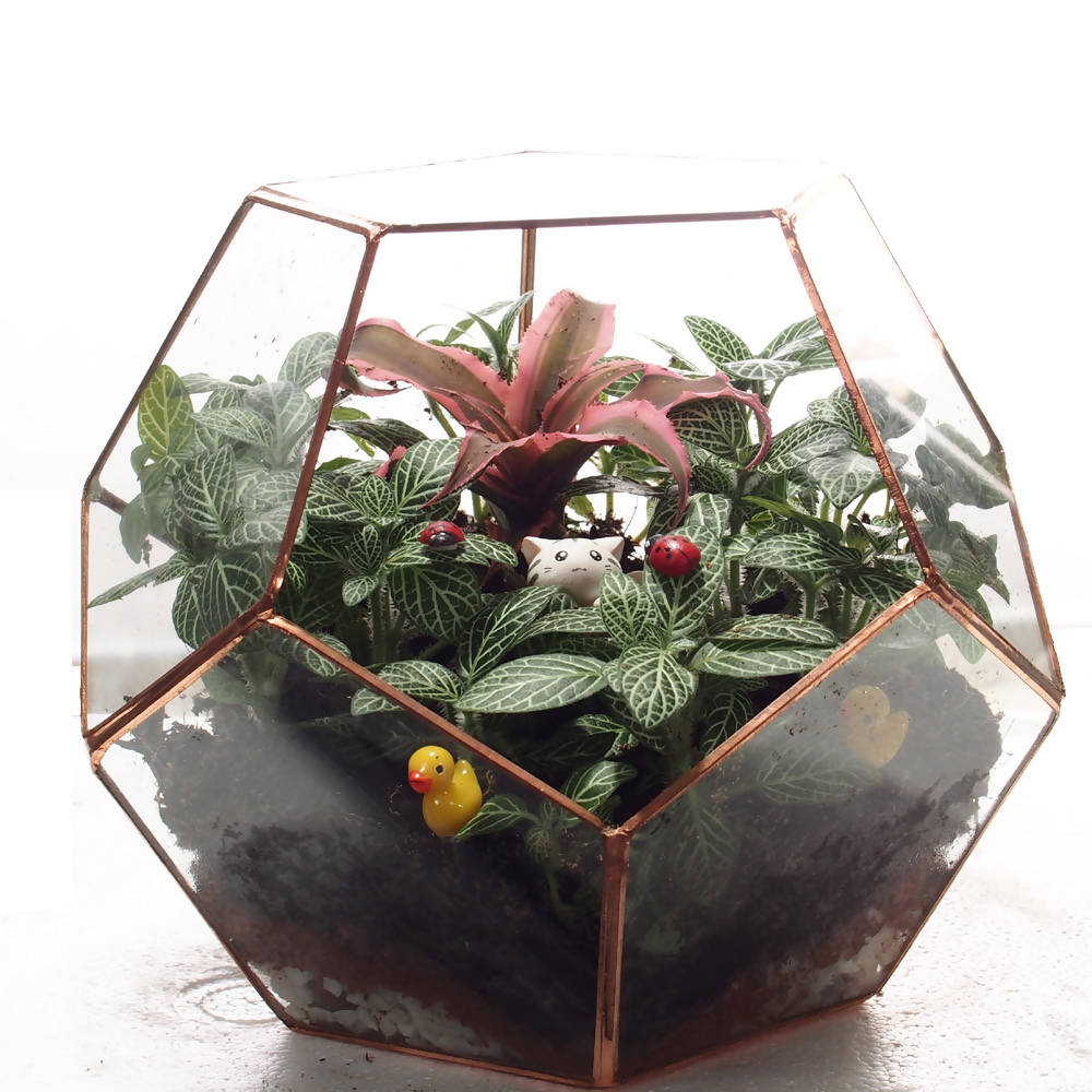 Miniature Fittonia in Football Terrarium