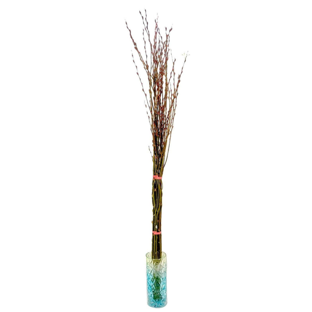 Pussy Willow Cutting Bundle (1.5m)