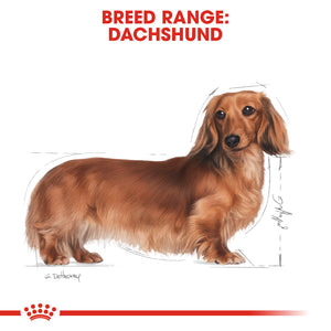 ROYAL CANIN® Dachshund Adult