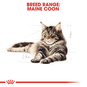 ROYAL CANIN® Maine Coon Adult