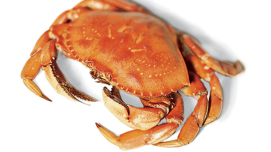 Dungeness Crab (pc)