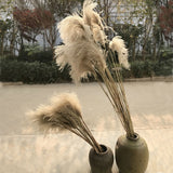 Dried Flower Reeds Ornament