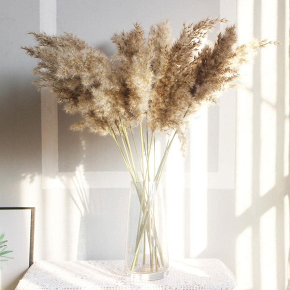 Dried Natural Pampas Plants