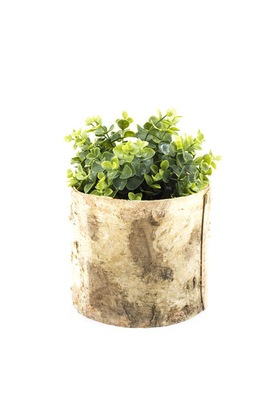 Birch Planter Box
