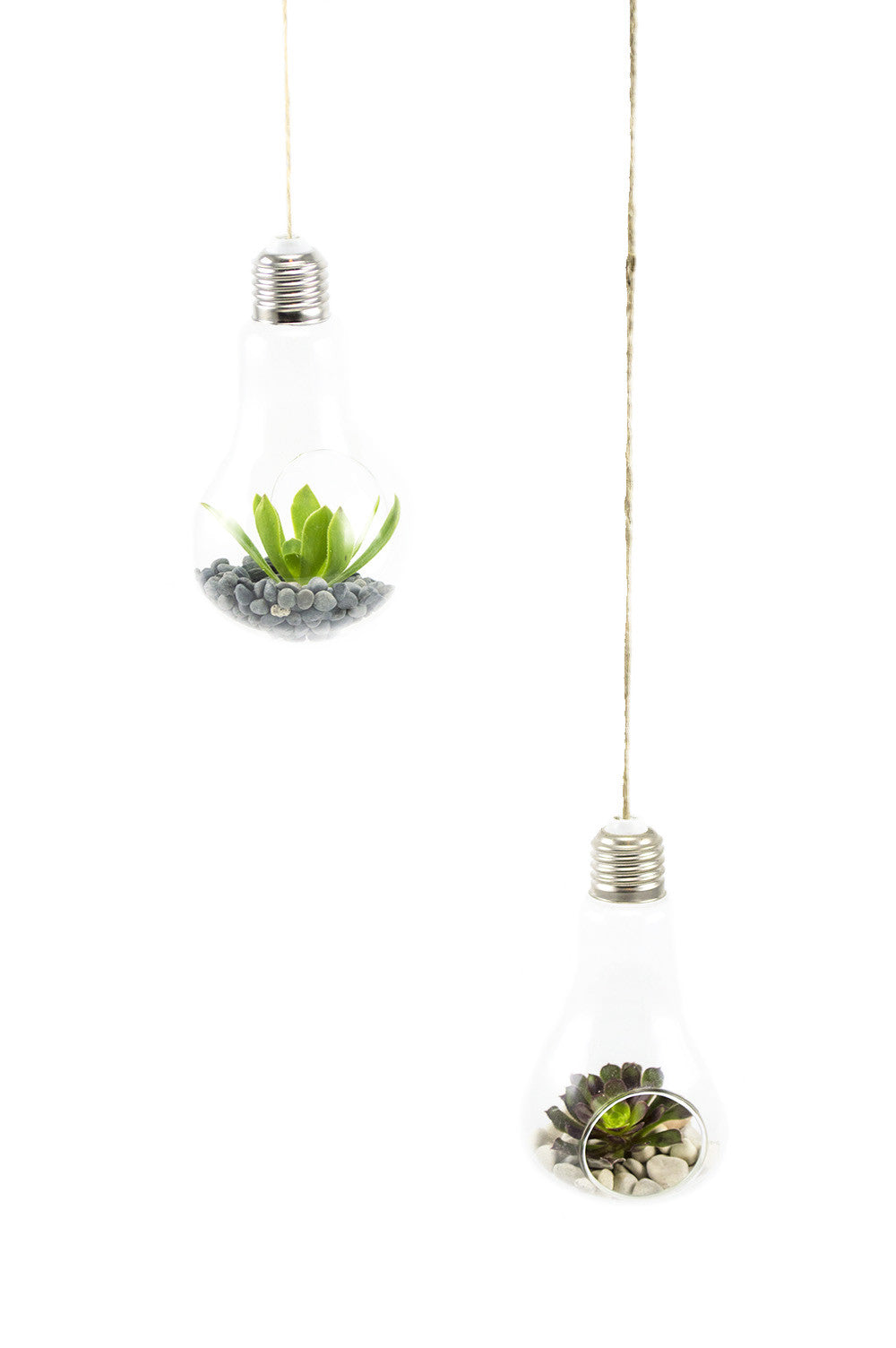 Hanging Light Bulb Terrarium