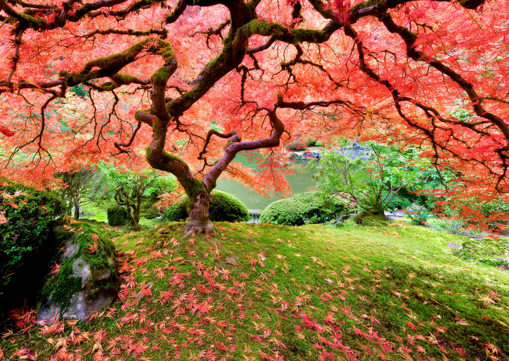 Japanese Maple Tree 100 Piece Jigsaw Puzzle - STEAM Kids Brisbane