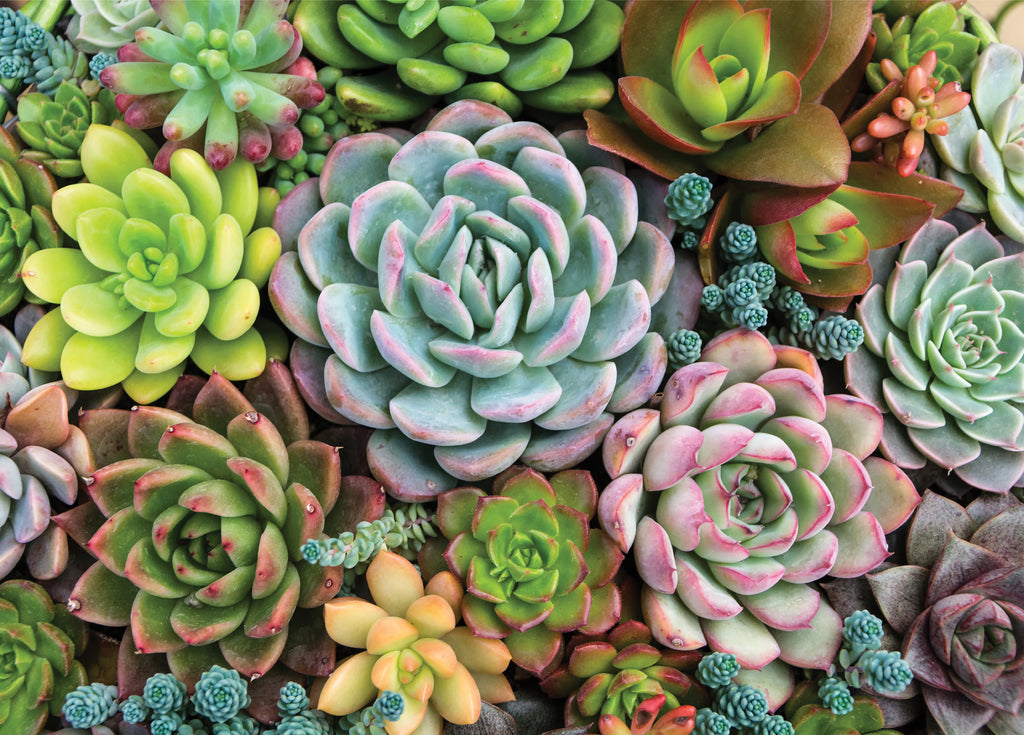 Succulent Garden 1000 Piece Jigsaw Puzzle |Peter Pauper Press| - STEAM Kids Brisbane