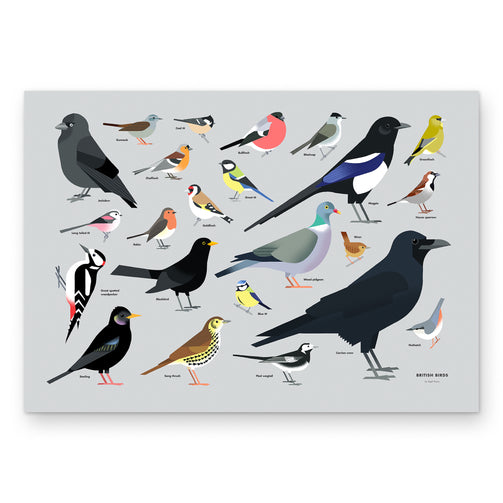 British Birds wall art print