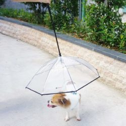 Clear dogbrella dog umbrella for smaller dogs.