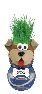 grow a pet dog spike grass heads