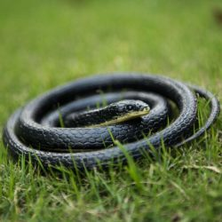 realistic rubber snake toy