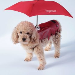 leashless pet umbrella saddle for small dogs.