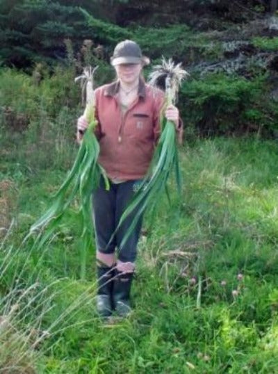 Jumbo Garlic Plants make great garden companions with Asparagus roots . Buy many garlic and plant all around your garden. Easy to grow and a garden delight. Where to buy Garlic Plants or cloves near me?