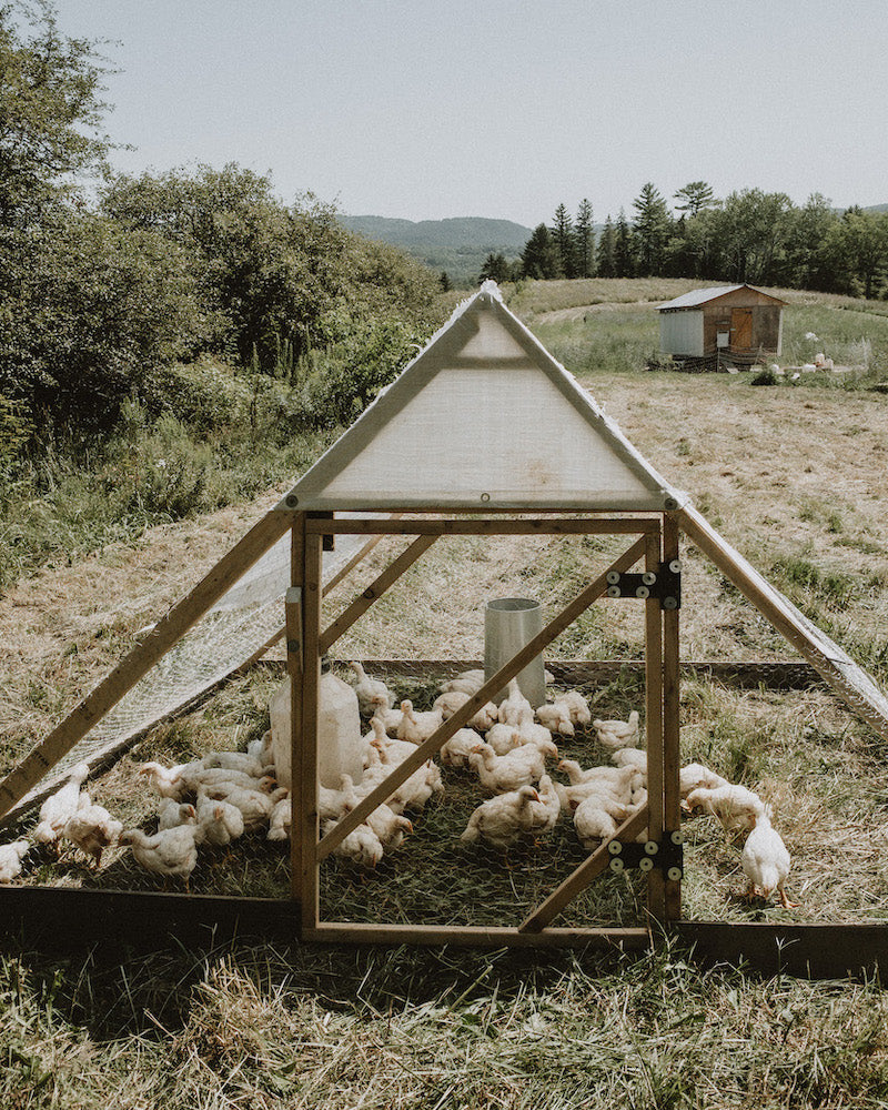 Totally Free Range Meat Chickens