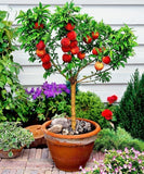 10pcs peach tree seeds,easy to grow,sweet peach tree bonsai plant for garden .