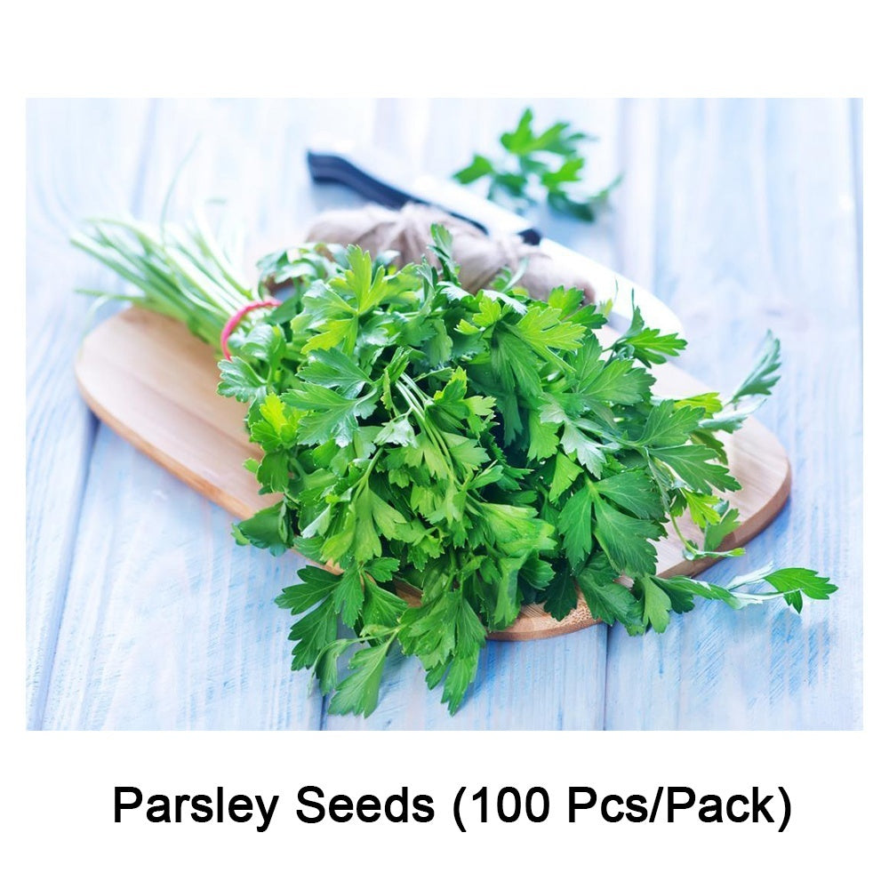 12 Kinds of Natural Culinary Herbs Sees Rosemary/Parsley/Dill/Rhubarb/Scallion/Basil/Coriander/Thyme/Arugula/Spinach/Origanum/Mint Seeds for Garden
