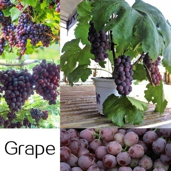 25 Kinds of Delicious Fruit Tree Seeds Mixed 300pcs Patio Fruit Bonsai Seeds for Home Garden Decor