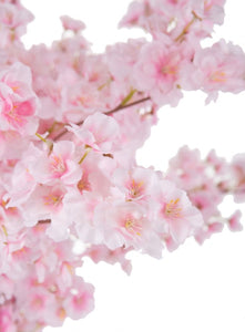 Spring Cherry Blossom Branches