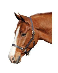 Gatsby Adjustable  Leather Halter , leather horse halter